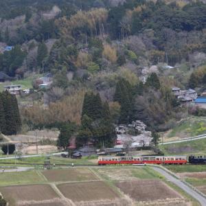 桜咲く里を走るトロッコ列車 - 2017年・小湊鉄道 -