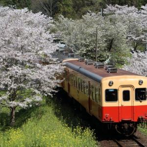 今年も花は咲いた - 2020年桜・小湊鉄道 -