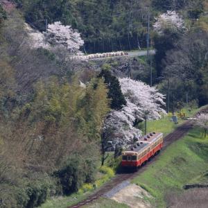 台風を乗り越えて春が来た - 2020年・秩父鉄道 -