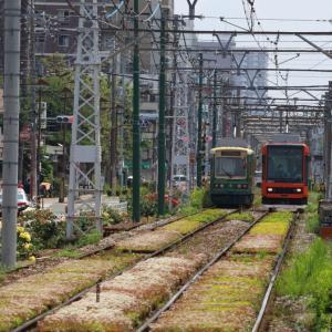 花に囲まれる電車 - 2020年・東京都電 -