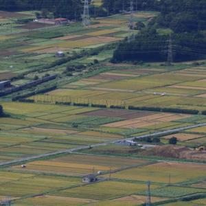 越後平野は稲刈りの日 - 2020年初秋・磐越西線 -
