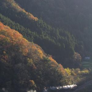 夕日に浮かぶ紅葉と白煙 - 2020年晩秋・山口線 -