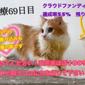 〜絶対助けたい!!致死率ほぼ100%の猫伝染性腹膜炎と闘うココに力を貸してください!!