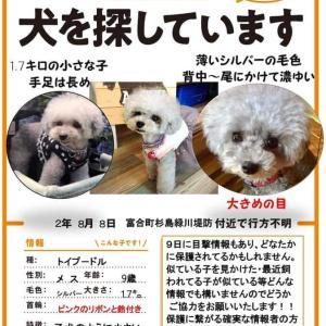 """拡散希望‼️""""【大事な家族を探しています】熊本市"""""""