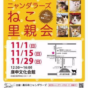 """""""11/29里親会のお知らせ"""""""