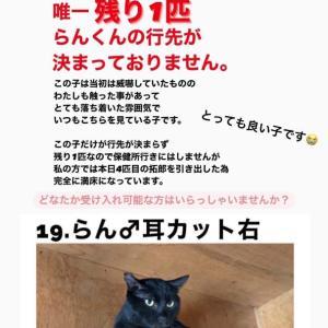 """里親様急募‼️""""大阪吹田市の猫さん達の案件"""""""