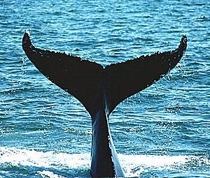 鯨に飲みこまれた 八戸