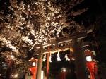 観 2019桜の京都編05 夜桜