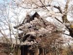 参 2019桜の京都編07 南禅寺