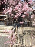 眺 2019桜の京都編09 佛光寺