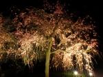 観 2019桜の京都編12 二条城