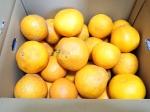 旨 お取り寄せ01 柑橘類