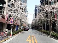 観 桜咲く