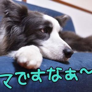 パパ…頑張るっ!(* ´艸`)クスクス