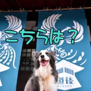 四国男旅♪⑨ ~ キミ…本当は??(笑) ~