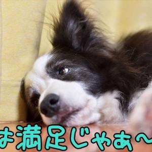 それは…やばい!(´-∀-`;)