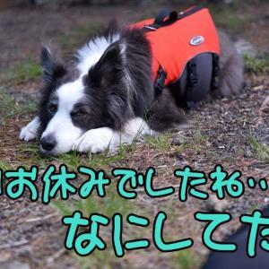バキューム(´-∀-`;)