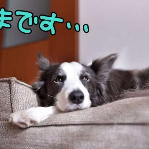 へ~んしんっ(* ´艸`)クスクス