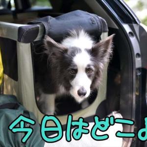 お彼岸( ̄ー ̄)