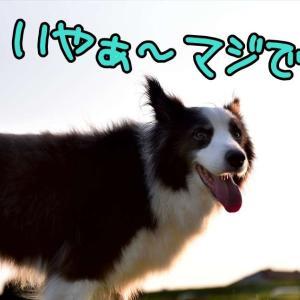 赤レオっち(* ´艸`)クスクス