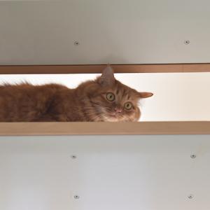 階段の、チャイ。