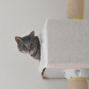 キャットタワーの巣箱から。
