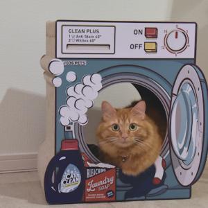 洗濯機のチャイ、また別のニャンコ。