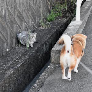 さくら猫さんに、会った朝。