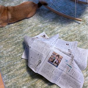 新聞、大好き。