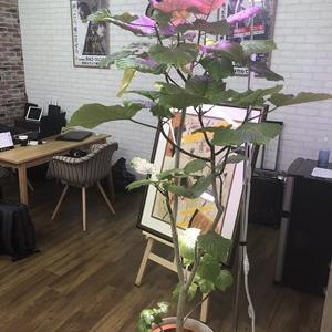 【総合探偵社ガルエージェンシー】大阪中央(難波・心斎橋)の事務所内で育てている植木