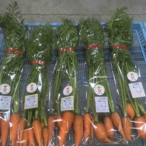 10/17 野菜収穫&出荷