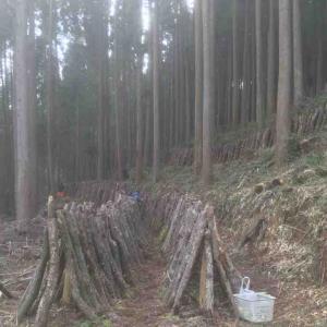 1/20-21 原木しいたけ収穫メモ