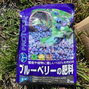 ブルーベリー肥料&草むしりetc