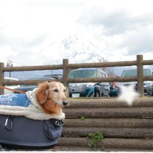 朝霧高原へ♪①(富士山わんわんマルシェとランチ)