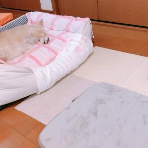 ちぃちゃんのベッドルーム笑