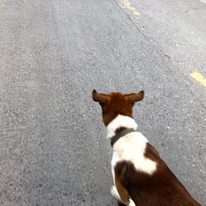 起き始める街、先導してくれる犬。