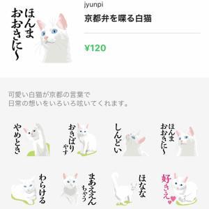 京都弁を喋る白猫
