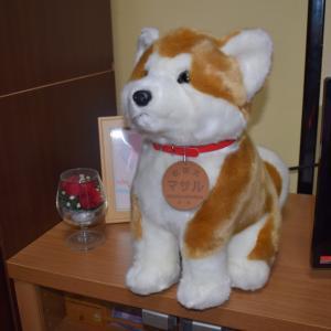秋田犬を 購入