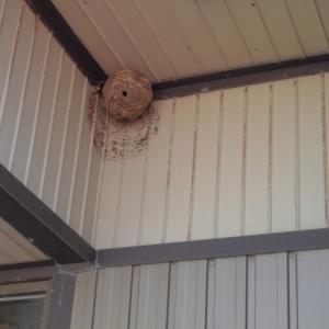 お客様の玄関先の巣