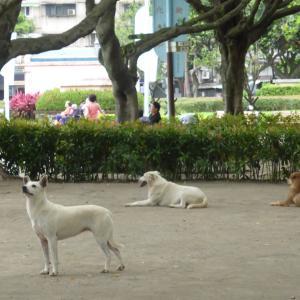 仁愛公園の犬さんたち