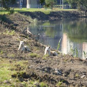 河川敷の犬たち