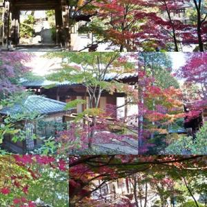 崇禅寺の紅葉