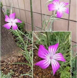可愛い花と虫…(;'∀')(閲覧注意)