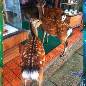 夏の思い出記録2019 広島2 鹿