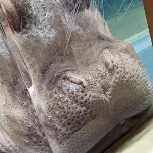 続・旭山動物園。