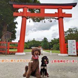 なぜか上賀茂神社