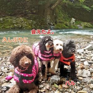 ハルぐみ姉妹と川遊び