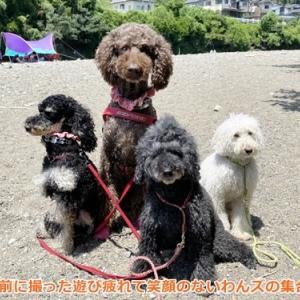 ハルぐみ姉妹と賀茂川で川遊び