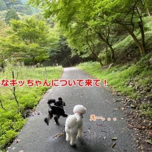 ハルぐみ姉妹と山散歩