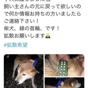 倉見駅寒川町で迷子の柴犬(緑の首輪)が保護されているそうです。